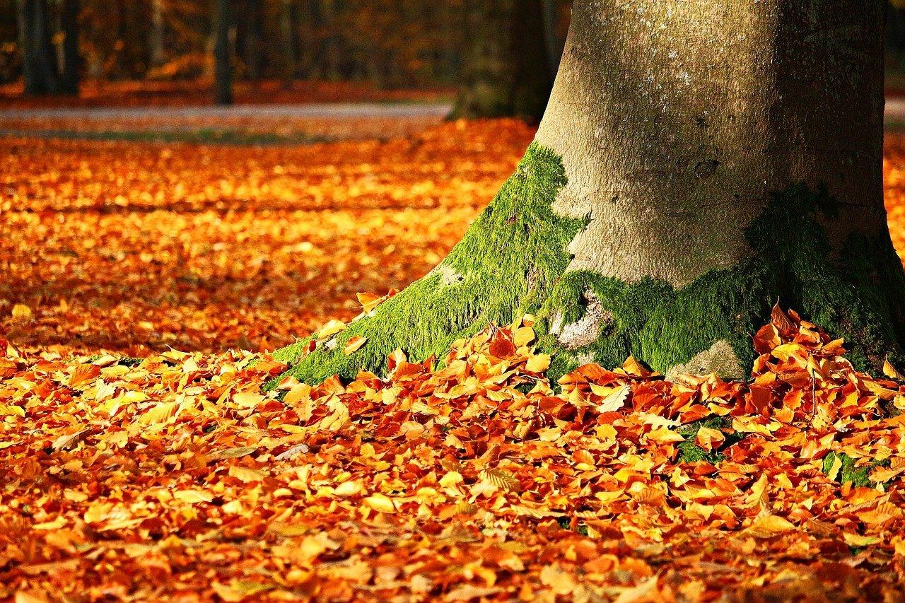 Efterårsfarver i en skov