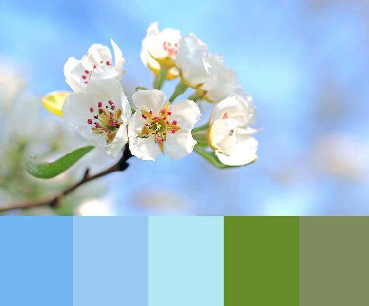 Blå forårsluft og sarte hvide blomster